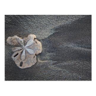 砂の砂ドル ポストカード
