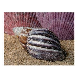 砂の郵便はがきの貝 ポストカード