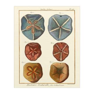砂ドルの宝石 アクリルウォールアート