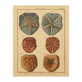 砂ドルの宝石 ウッドウォールアート