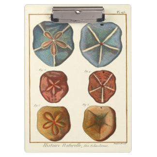 砂ドルの宝石 クリップボード