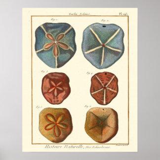 砂ドルの宝石 ポスター