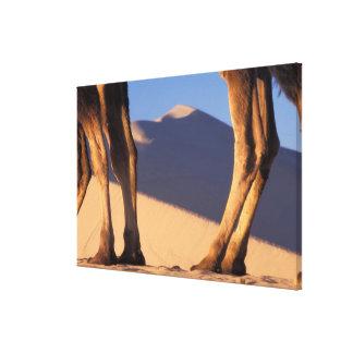 砂丘、トンホワン、カンスーが付いているラクダの足 キャンバスプリント