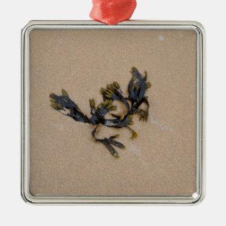 砂浜コーンウォールイギリスの海藻 メタルオーナメント