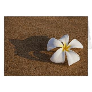 砂浜、マウイ、ハワイ、米国のプルメリア カード