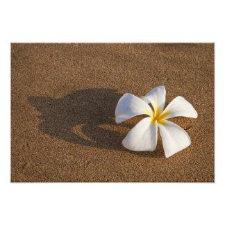 砂浜、マウイ、ハワイ、米国のプルメリア フォトプリント