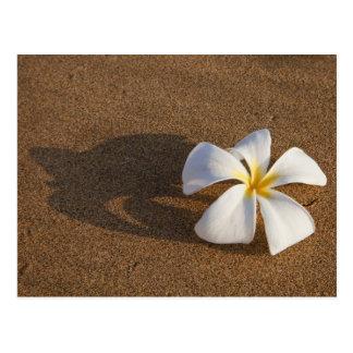 砂浜、マウイ、ハワイ、米国のプルメリア ポストカード