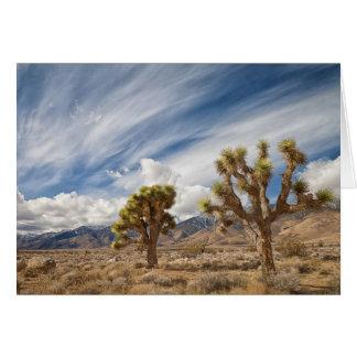 砂漠のジョシュアツリー カード