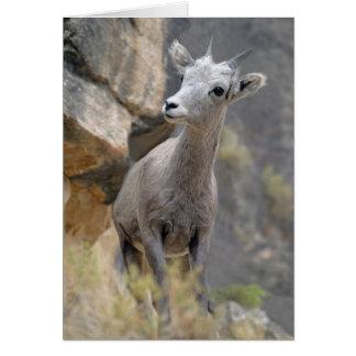 砂漠のビッグホーンの雌ヒツジ カード