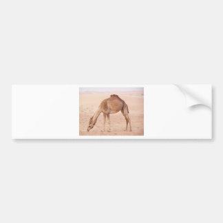 砂漠のラクダ バンパーステッカー