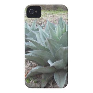 砂漠のリュウゼツランの植物 Case-Mate iPhone 4 ケース