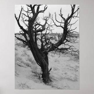 砂漠の木ポスター ポスター