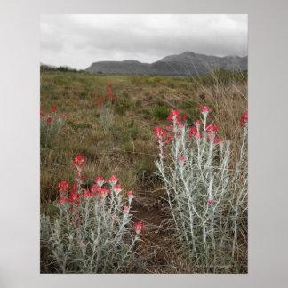 砂漠の植物のクローズアップ、Delリオ、テキサス州、米国 ポスター