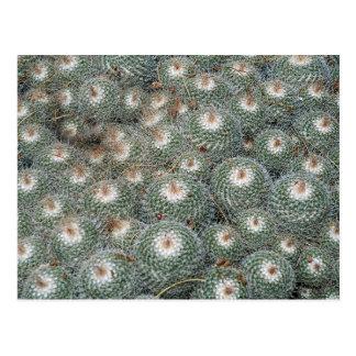 砂漠の植物園のサボテン、フェニックスScotts ポストカード