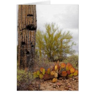 砂漠の植物 カード