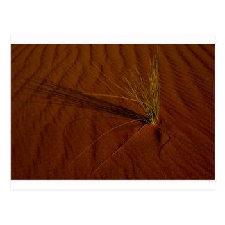 砂漠の生命 ポストカード