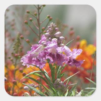 砂漠ヤナギの開花 スクエアシール