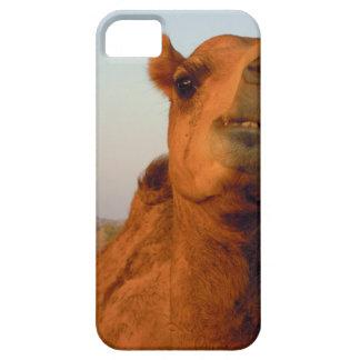 砂漠2のラクダ iPhone SE/5/5s ケース