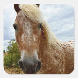 砂糖で甘くして下さいAppaloosaの馬、_を スクエアシール
