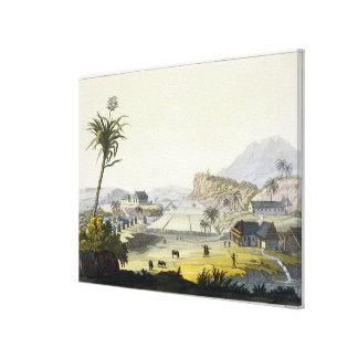 砂糖のプランテーション、アンチル諸島(色の版木、銅版、版画) キャンバスプリント