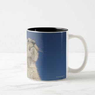 砂、ナミビアに坐るライオンの子(ヒョウ属レオ) ツートーンマグカップ