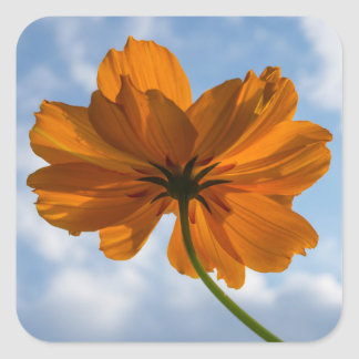 硫黄の宇宙のオレンジ花の正方形のステッカー スクエアシール