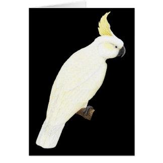 硫黄頂点に達されたオウム- Cacatuaのgaleritaの黒 カード