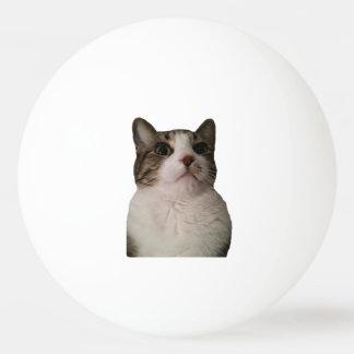 確実な猫の球 卓球ボール