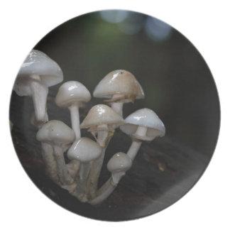 磁器の菌類、Oudemansiellaのmucida プレート