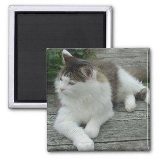 磁石-メインのあらいぐま猫のイメージ1 マグネット