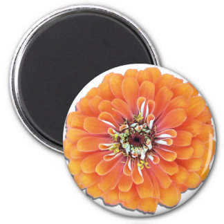 磁石-円形-オレンジ《植物》百日草 マグネット