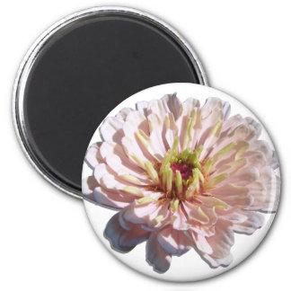 磁石-円形-最も淡い色のなピンクの《植物》百日草 マグネット