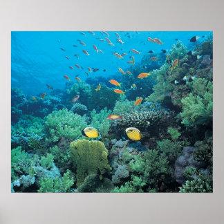 礁に泳いでいる熱帯魚 ポスター