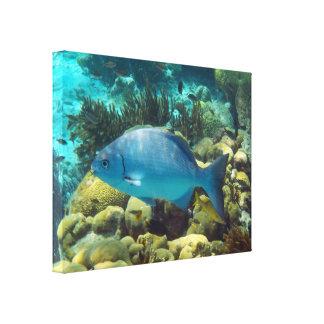 礁の魚 キャンバスプリント