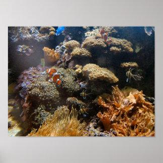 礁の魚- Clownfish ポスター