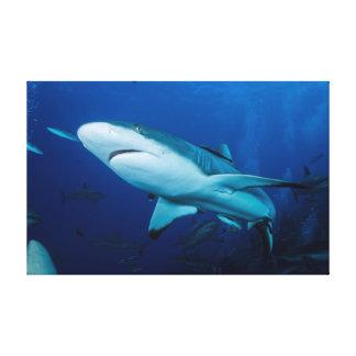 礁の鮫のキャンバスプリント キャンバスプリント