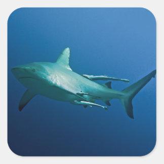 礁の鮫のグレート・バリア・リーフの珊瑚海 スクエアシール