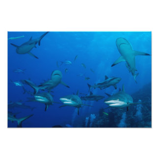 礁の鮫のグレート・バリア・リーフの珊瑚海 フォトプリント