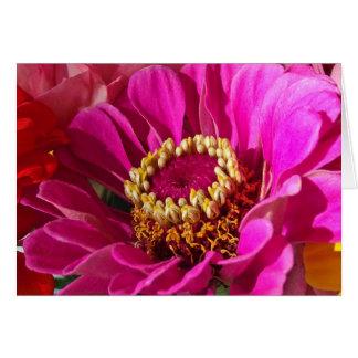 祖母、ピンクの《植物》百日草の花のための誕生日 グリーティングカード
