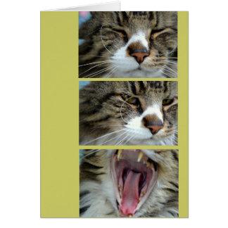 祝っていたり/バースデー・カードChillin猫 カード