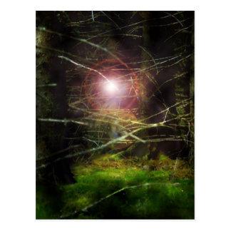 神秘的な森林 はがき