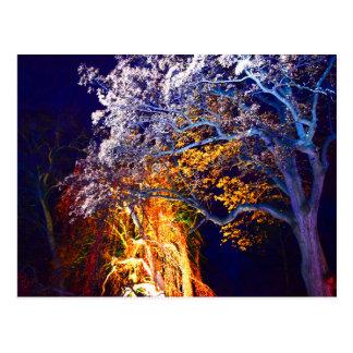 神秘的な照明の木の郵便はがき ポストカード