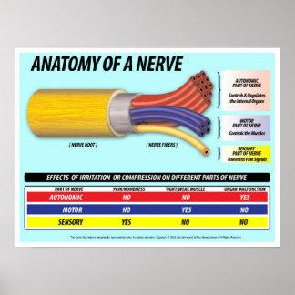 神経の2016年の版の解剖学 ポスター