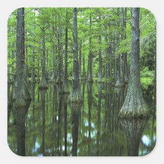 禿げた米国、フロリダ、アパラチコーラ川の国有林 スクエアシール