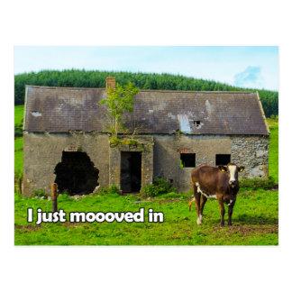 私が牛郵便はがきでちょうどmooovedケルト語アイルランド ポストカード
