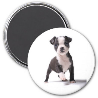 私にあなたの足のボストン子犬の磁石を与えて下さい マグネット