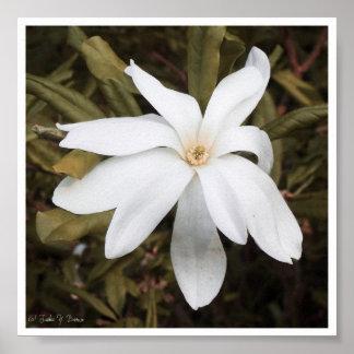私の公平な花のプリント ポスター