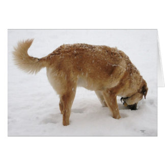 私の心の調査及び救助のゴールデン・リトリーバー犬を失った カード