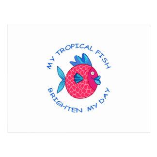 私の熱帯魚 ポストカード
