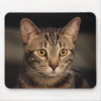 私の猫マット・デイモン マウスパッド